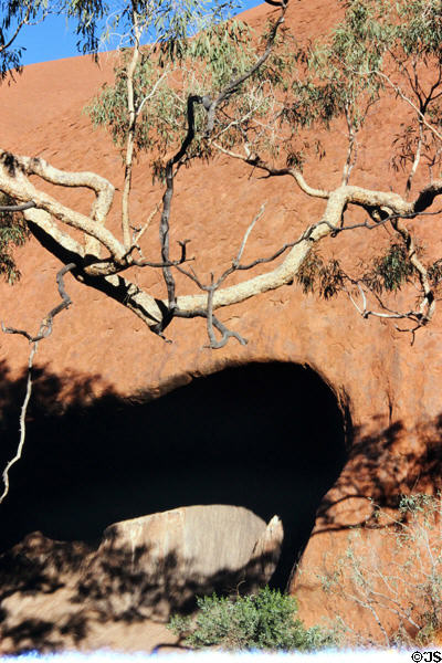 Tree branch hangs over a cave at base of Ayers Rock. Australia.