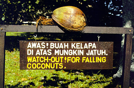 Coconut warning sign at Bako National Park in Sarawak. Malaysia.