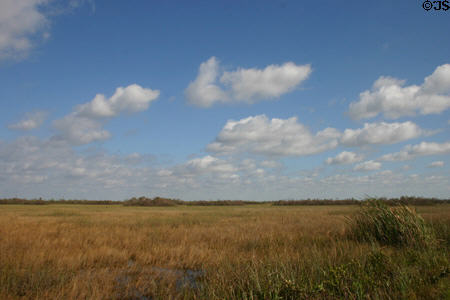 Rivers of grass of Everglades National Park. FL.