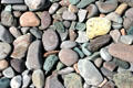 Colored rocks on beach on Bay of Fundy. NB.