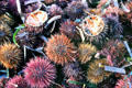 Sea urchins for sale in old port. Marseille, France.