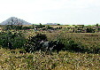 Traditional ox cart farming on fields South of Oaxaca. Mexico.