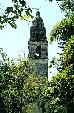 Cathedral tower rises above trees in Cuernavaca. Mexico.