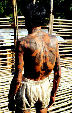 Tattoos on back of old warrior from Ugat longhouse in Sarawak. Malaysia.