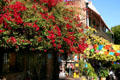 Flowers along Olvera Street. Los Angeles, CA.