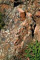 Lichens on granite of Gunnison National Park. CO.