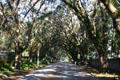 Street covered by canopy of trees & moss. St Augustine, FL.