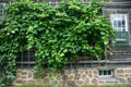 Typical Amana grape trellis attached to side of building. High Amana, IA.