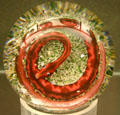 Red glass snake paperweight at Illinois State Museum. Springfield, IL.