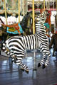 Zebra on Herschell-Spillman Carousel at Greenfield Village. Dearborn, MI.