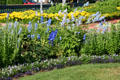 Blue & yellow beds in Clemens Botanical Gardens. St. Cloud, MN.