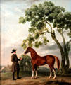 Lord Grosvenor's Arabian Stallion with Groom painting by George Stubbs at Kimbell Art Museum. Fort Worth, TX.